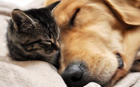 Лечим конъюнктивит у кошек и собак