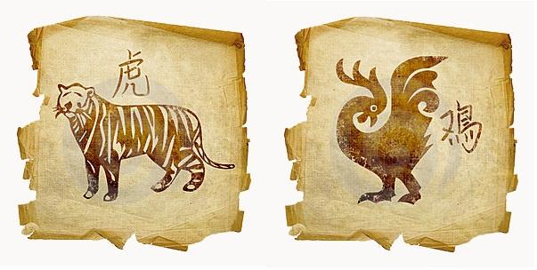 tigr-petuh