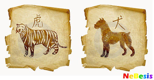 Тигр-мужчина и Собака-женщина