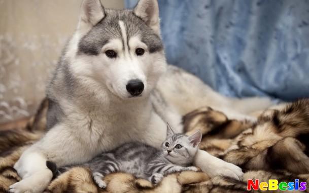 Ультразвуковая чистка зубов у домашних животных