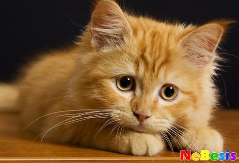 Что делать если у кота слезится глаз и чихает