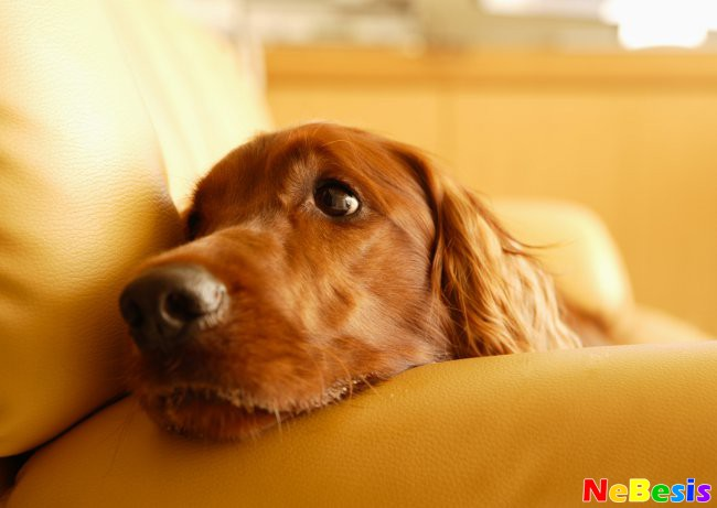 Почему у собаки слезятся глаза?