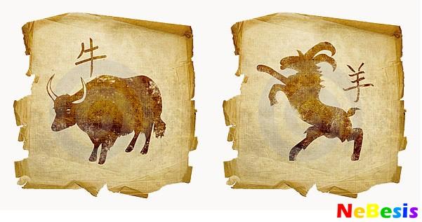 Коза-мужчина и Бык-женщина