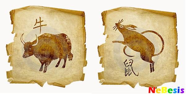 Крыса-мужчина и Бык-женщина