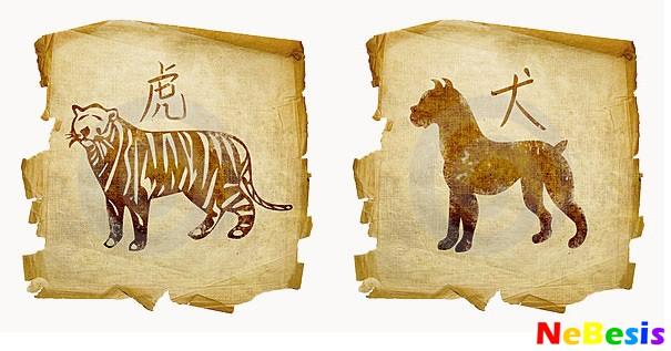 Собака-мужчина и Тигр-женщина