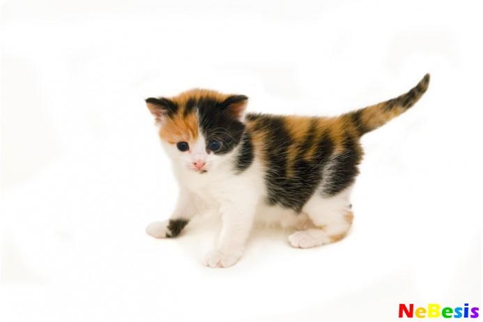 Кошка по Фен-шуй
